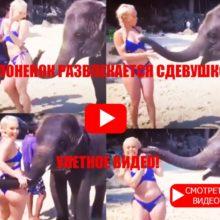 Слоненок развлекается с девушкой!